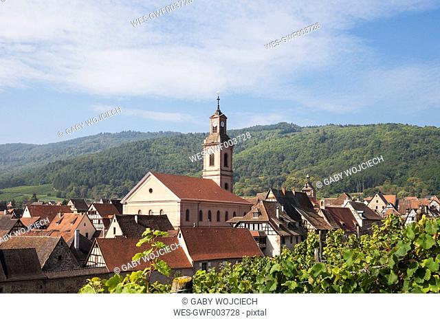 France, Alsace, Alsatian Wine Route, Haut-Rhin, Riquewihr, vineyard, Ballons des Vosges Nature Park