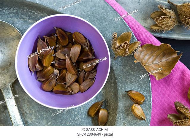 Beech seeds (Fagus sylvatica) in a small bowl
