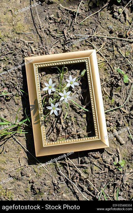Blooming beautiful flowers in frame on grass