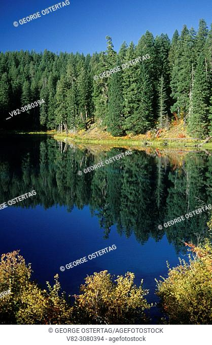 Clear Lake from McKenzie River National Recreation Trail, Willamette National Forest, Oregon