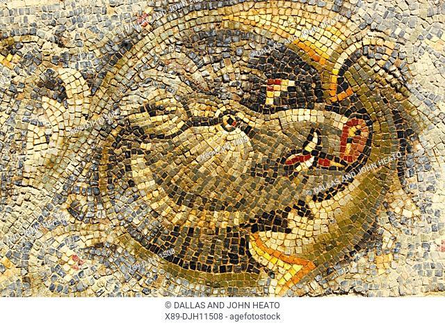 Africa, Tunisia, Bulla Regia Archaeological Site, Roman Ruins, New House of the Hunt, Wild Boar Mosaic