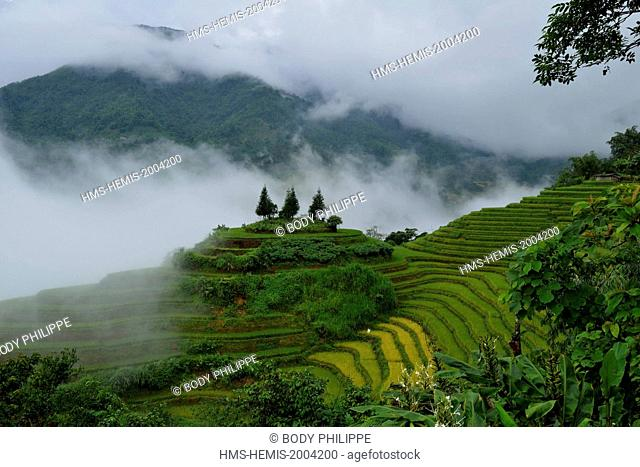 Vietnam, Ha Giang province, Ha Giang, rice fileds in terrace