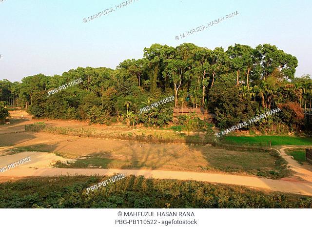 A forest at Ukhiya Cox's Bazar, Bangladesh February 2011
