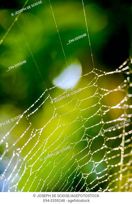 Detail of a spider web with dew droplets