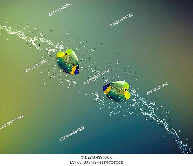 Angelfish jumping, good concept for Recklessness and challenge concept