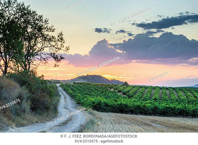 Vineyards of Briones, La Rioja, Alava, Basque Country, Spain