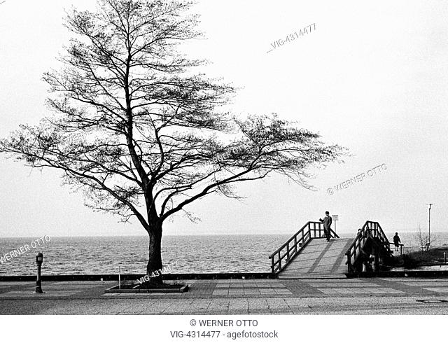 DEUTSCHLAND, WUNSTORF, STEINHUDE, 27.01.1974, Seventies, black and white photo, winter, lakeside promenade on the Steinhude Lake, bare tree
