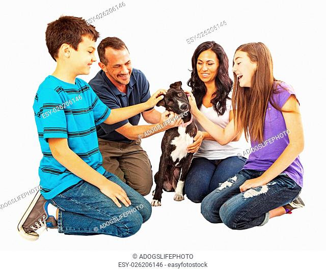 A happy, young and attractive family petting their new mixed breed dog that they just adopted