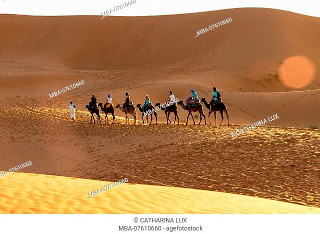 Morocco, Merzouga, Desert, Safari, Caravan in the Evening Light