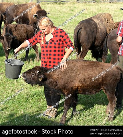 """01 October 2020, Saxony, Wermsdorf: In her bison enclosure, Cora Lechner gives the """"""""bottle"""""""" to the hand-raised calf """"""""Hannes"""""""""""