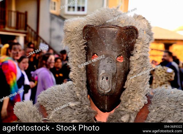 Bear of Salcedo. Traditional mask and fertility rite of Salcedo, Pobra do Brollon, Lugo, Spain