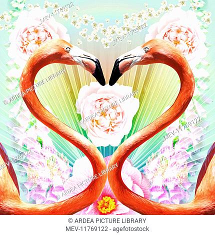 Flamingo a pair of Flamingos creating a heart shape with Roses and flowers Digital Manipulation: Flamingo & all flowers PM Flamingo a pair of Flamingos creating...