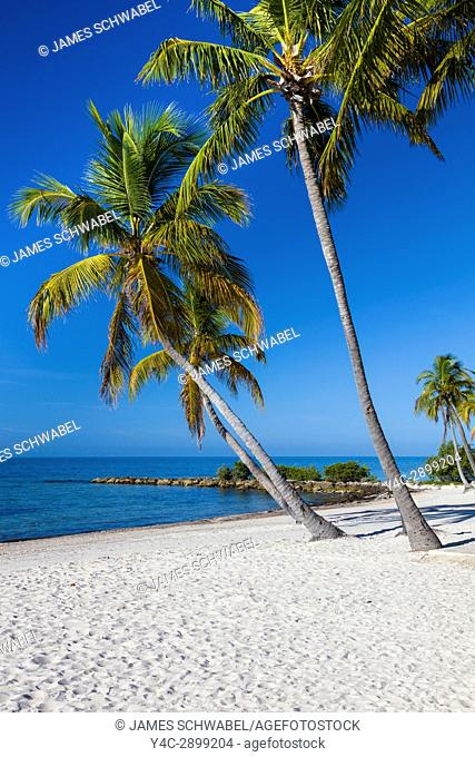 Tropical Palm trees on clean white sand Smathers Beach in Key West