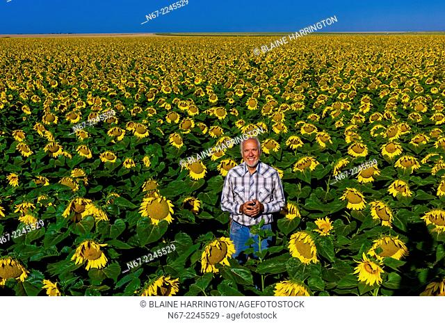 Farmer Gary Schields, Sunflower fields, Schields & Sons Farm, near Goodland, Western Kansas USA