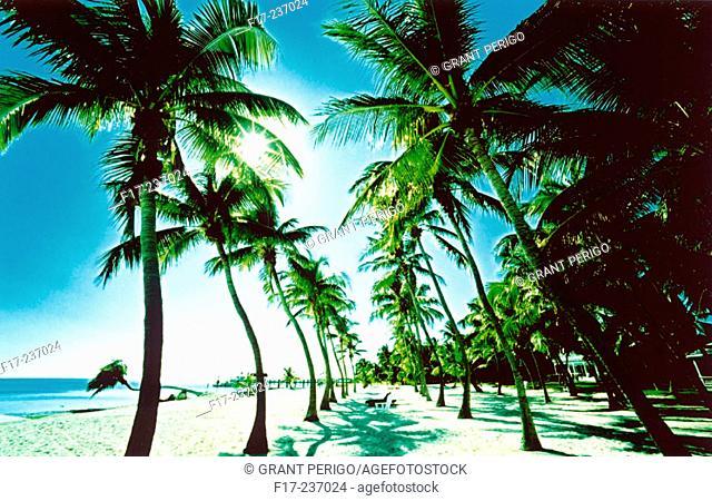 Islamorada. Florida Keys. USA