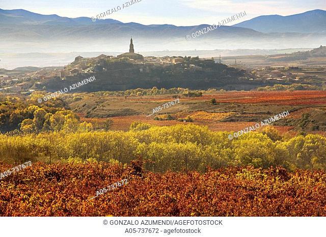 Vineyards near San Vicente de la Sonsierra and Briones in background, La Rioja, Spain