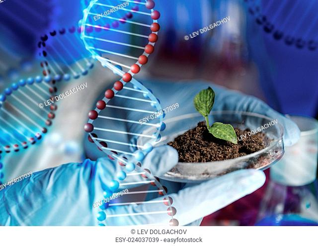 science, biology, ecology, research and people concept - close up of scientist hands holding petri dish with plant and soil sample in bio laboratory over dna...