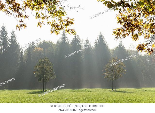 Sun Gazes through Trees in Botanica Recreational Gardens in Autumn. Bad Schallerbach. Austria