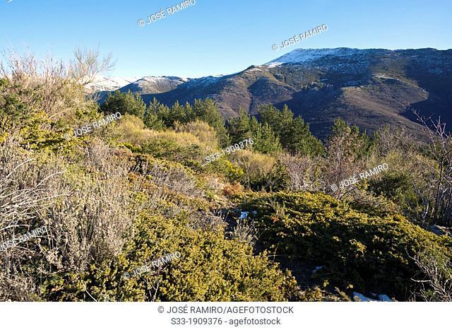 The Cerrón peak in the Sierra Norte  El Cardoso de la Sierra  Guadalajara  Castilla la Mancha  Spain