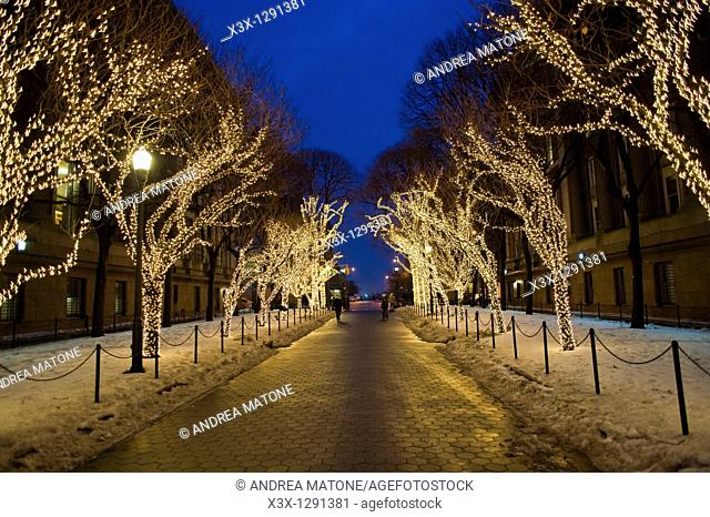Christmas lights on trees in the Columbia University campus  Manhattan, New York City, USA