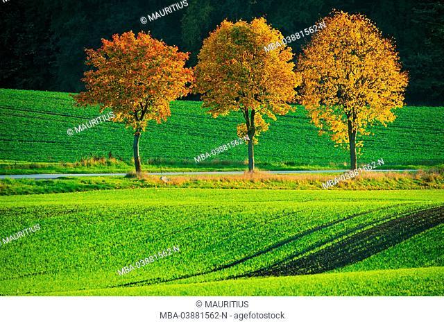 Autumn impression at Neuhorst at the Oldenburg Wall