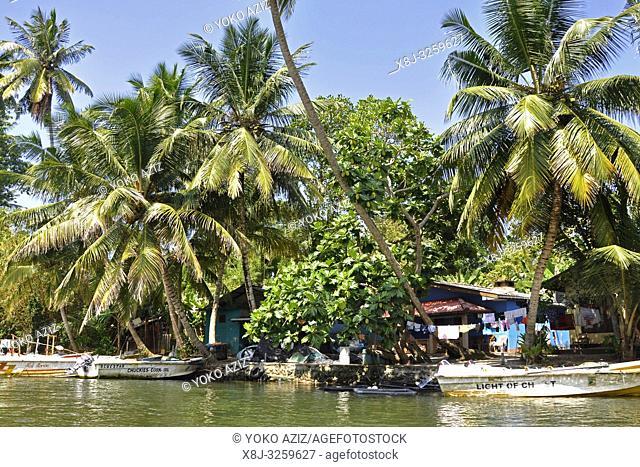 Sri Lanka, Balapitiya, Madu Ganga river