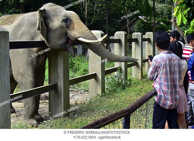 Elephant at Phnom Tamao zoo,zoological garden,wildlife rescue center,Cambodia,South east Asia