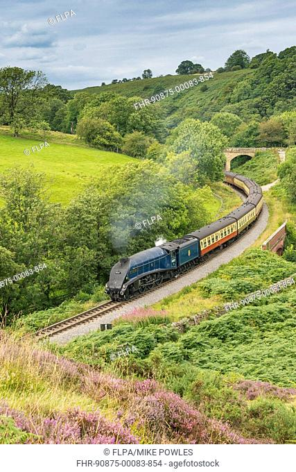 'Sir Nigel Gresley' steam train and carriages, travelling through moorland from Pickering to Goathland, North Yorkshire Moors Railway, North Yorkshire, England