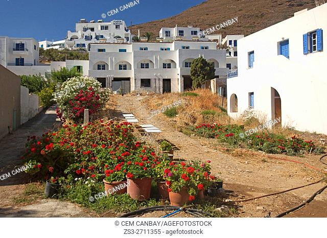 Geranium flowers in the port village Katapola, Amorgos, Cyclades Islands, Greek Islands, Greece, Europe