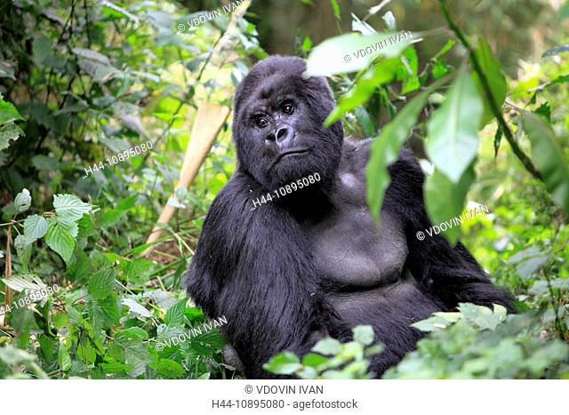 Africa, African, Travel, Nature, Animal, animals, fauna, Sub-Saharan, East Africa, Wild, wild life, wildlife, ecosystem, safari, trip, Adventure, tropics