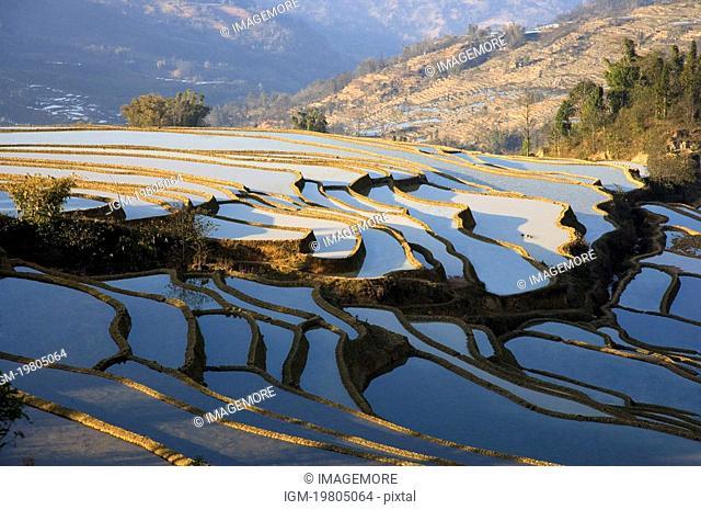 China, Yunnan Province, Yuanyang, Beida Terraced Field