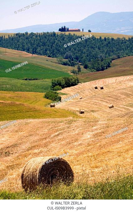 Field with hay bales, Val d'Orcia, Siena, Tuscany, Italy