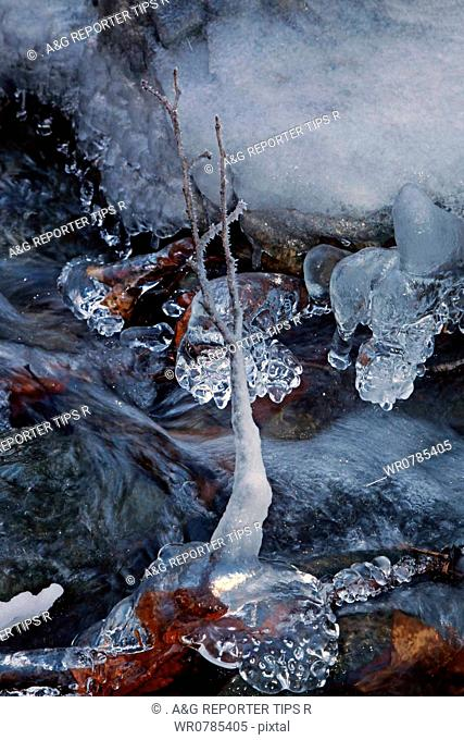 Leaves in frozen water
