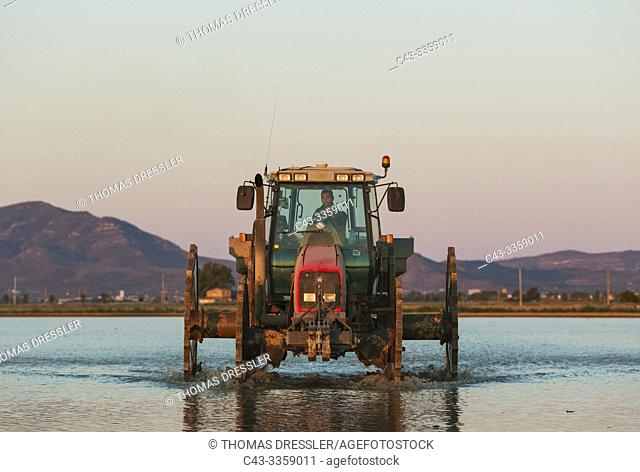 A tractor is used for sowing rice seeds in the flooded rice fields. Environs of the Ebro Delta Nature Reserve, Tarragona province, Catalonia, Spain