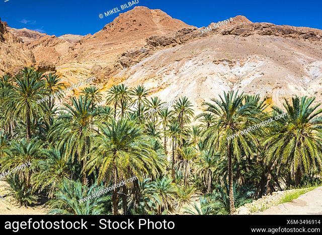 Mountain oasis. Chebika. Tunisia, Africa