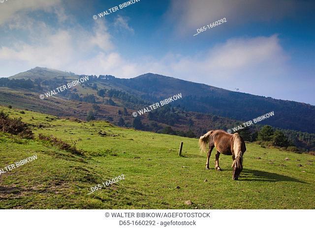 Spain, Basque Country Region, Guipuzcoa Province, Hondarribia, horses along the Jaizkibel Road