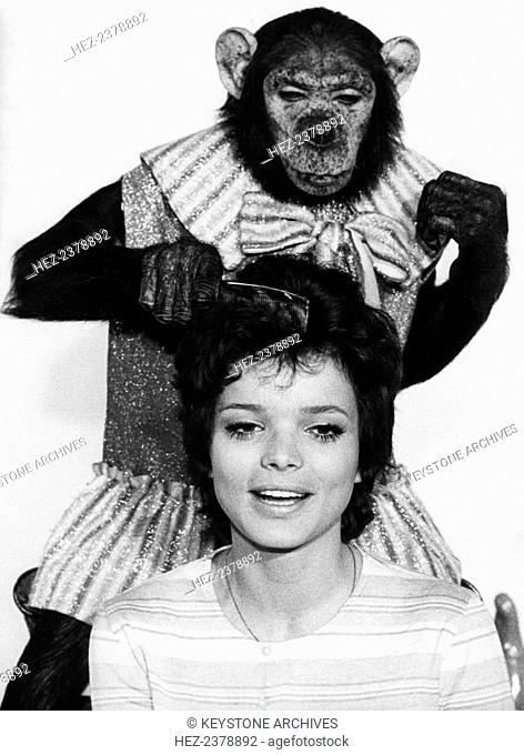 German actress and film star Uschi Glas and Sammy the chimp, Munich, Germany, 1970. Glas (1944-) during the filming of 'Wir hau'n die Pauker in die Pfanne'