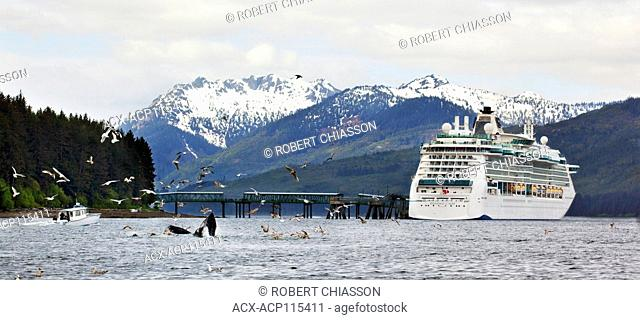 Humback whales feeding near a cruise ship docked at a berthing facility in Icy Strait Point, Alaska, U.S.A