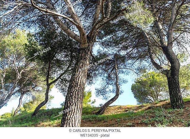 Forest at Andalusia, Spain