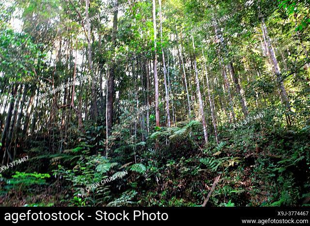 Tropical rain forest lanscape, mount matang, kuching, sarawak, malaysia, borneo