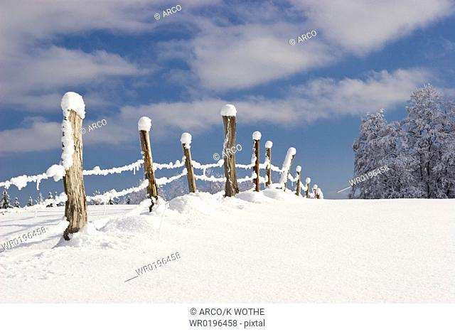 Snow covered poles