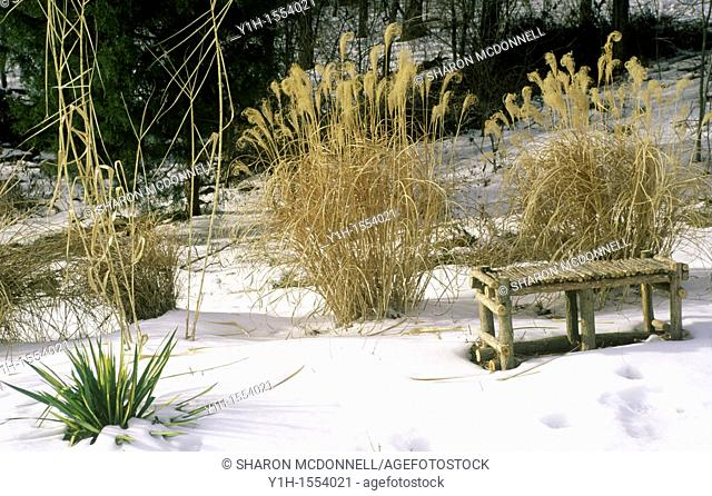 In winter you can see the garden's bones and appreciate subtle decorative touches, berries and seed pods