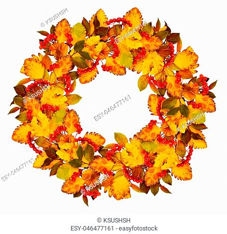 Autumn wreath from dry colored leaves and rowan berries isolated on white background. Flat lay