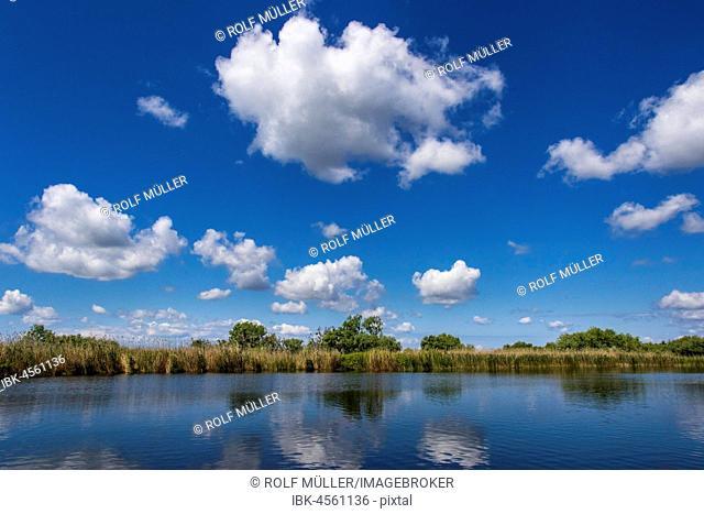 Danube in the biosphere reserve Danube Delta, Danube, district of Tulcea, Romania