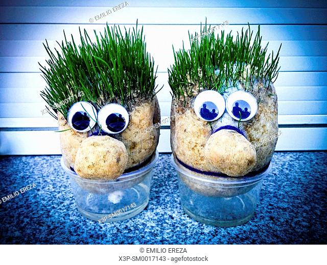 Grass dolls