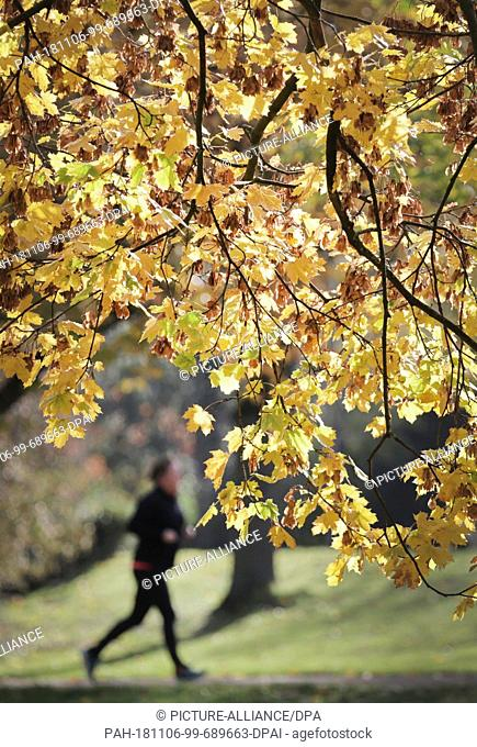 06 November 2018, North Rhine-Westphalia, Düsseldorf: A jogger walks past the autumn-coloured leaves of the trees in the courtyard garden