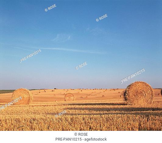 Feld abgeerntet Strohballen Heuballen