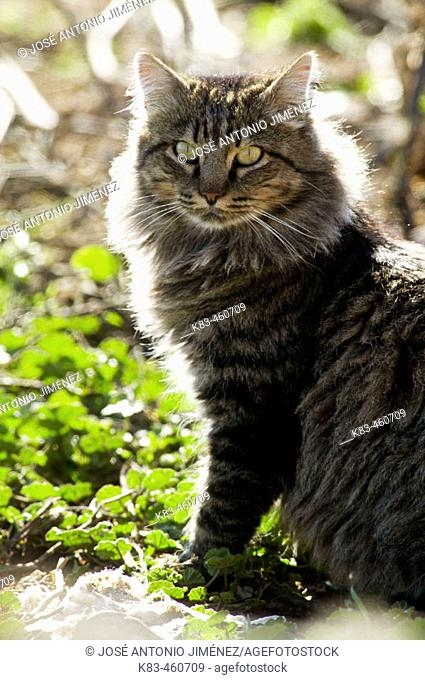 Cat in backlight