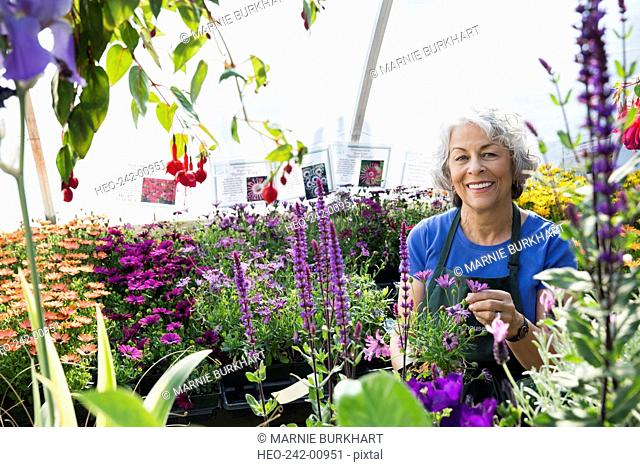 Portrait confident worker surrounded by flowers in greenhouse