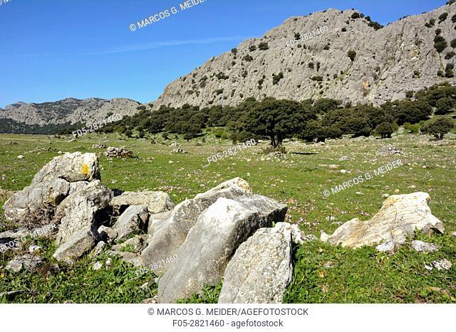 Llanos del Libar. Sierra de Grazalema Natural Park, Montejaque, Malaga, Andalucia, Spain